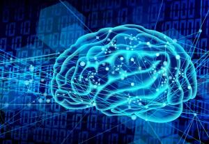 脳 (1)
